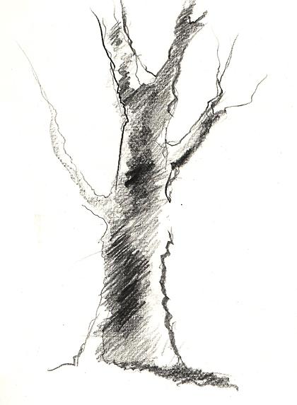 Comment dessiner un arbre apprenez a - Dessiner un arbre ...