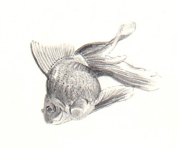 poisson4