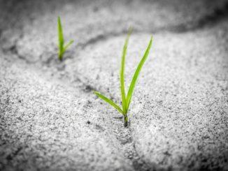 herbe sable e1525100604137 - Pratique: pour garder la motivation.... penser en positif