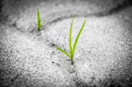 herbe sable e1525100604137 - Partageons les bonnes initiatives...