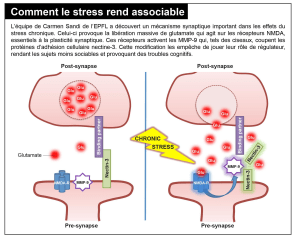 EPFL stress glutamate - EPFL-stress-glutamate