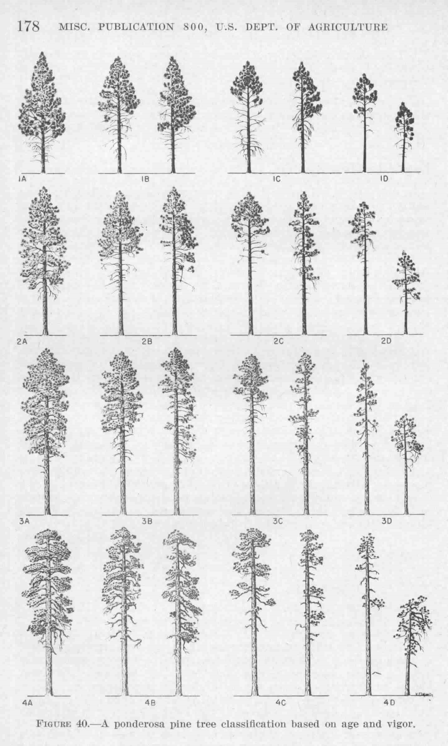 hight resolution of keen s tree classification for ponderosa pine
