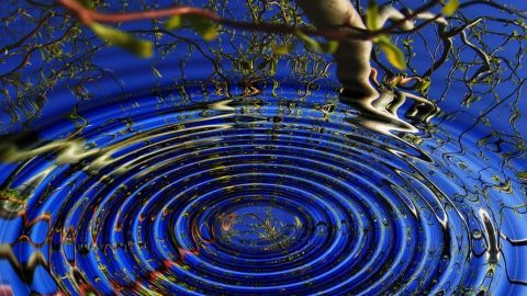 ripple-digital-asset