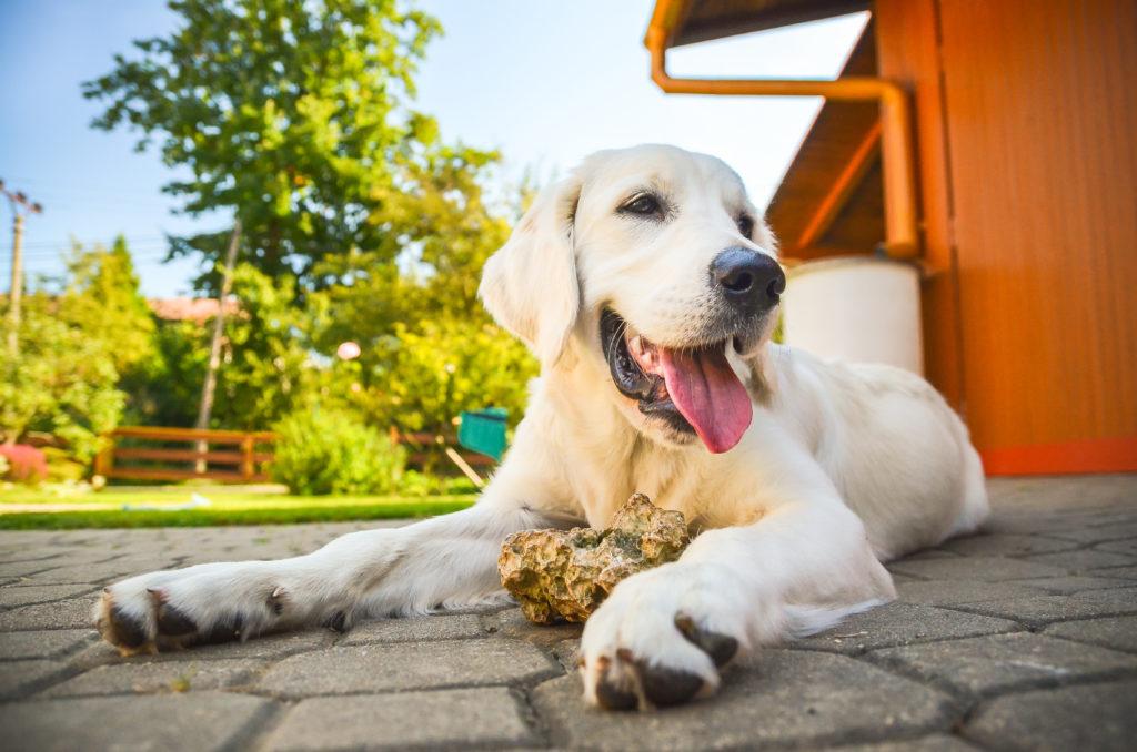 Vivere con un cane significa costruire una relazione con un altro individuo.