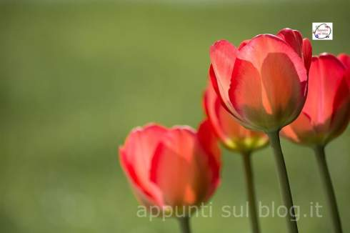 16 Piante e fiori purifica aria in casa 3 dracena