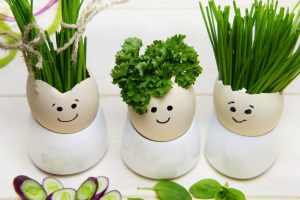 9 piante medicinali e  proprietà curative