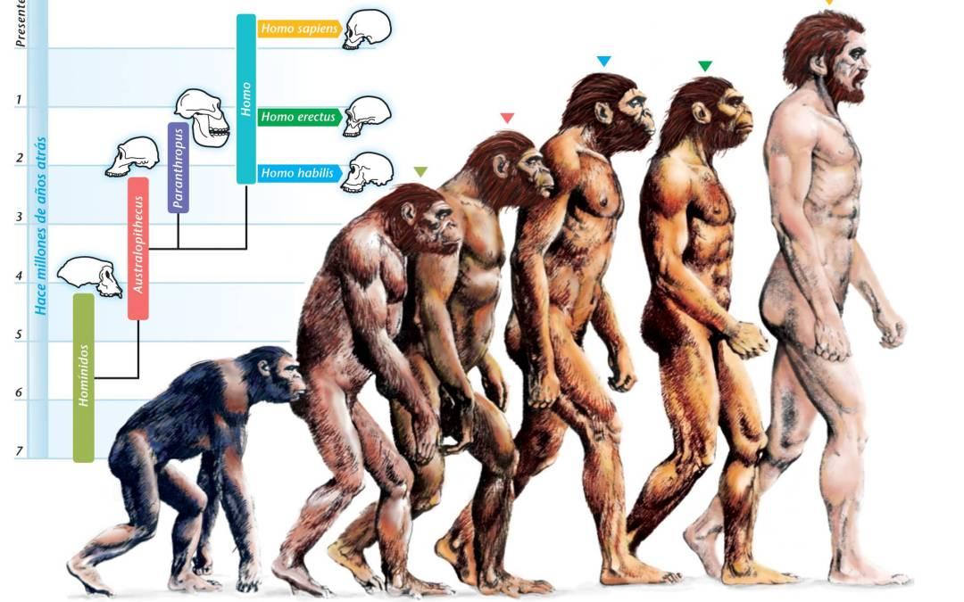 La evolución como un hecho y una teoría