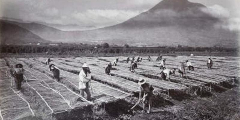 Historia del caf en Guatemala  Aprende Guatemalacom