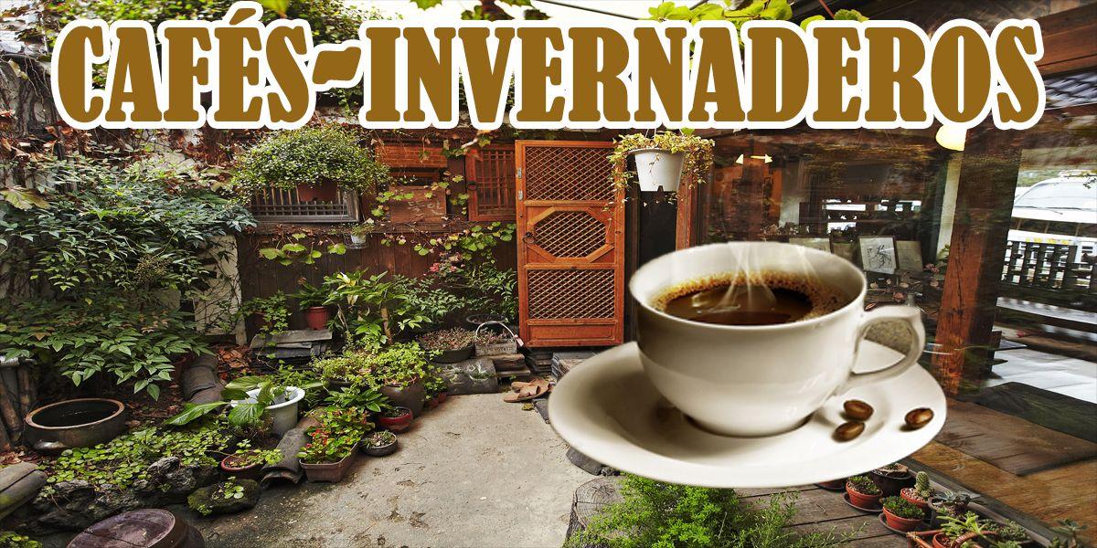 Los cafés de invernadero están de moda en Seúl
