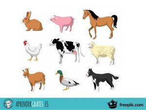 Aprender Gratis | Curso sobre comportamiento y evolución de los animales