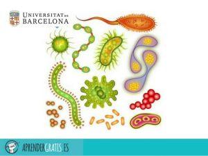 Aprender Gratis | Curso sobre técnicas microscópicas