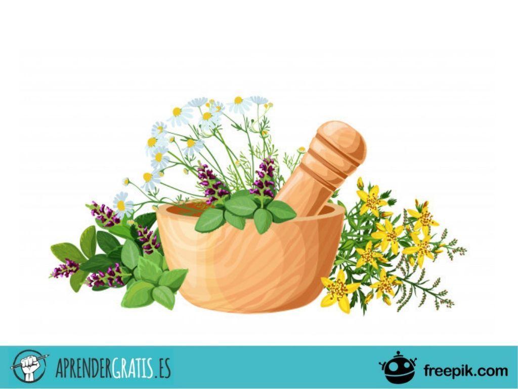 Aprender Gratis   Curso sobre medicina herbal