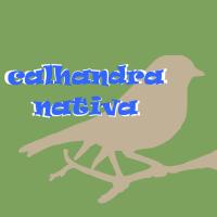 Calhandra Nativa