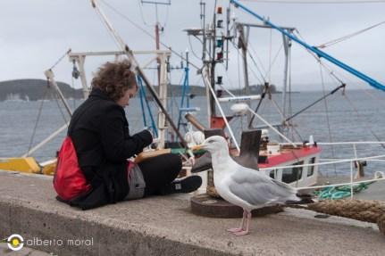 Escocia - Puerto de Oban