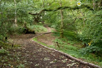 Escocia - Bosque
