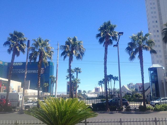 Las Vegas - Palm Trees