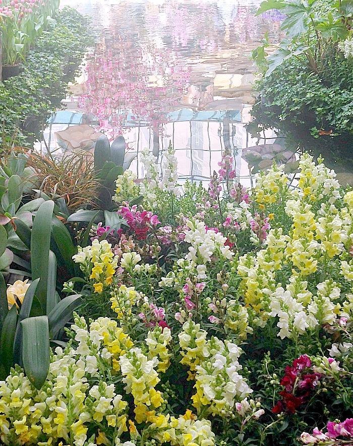 Botanical Garden - Las Vegas - pond