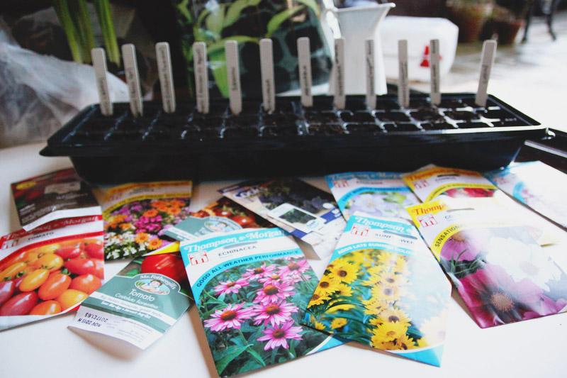 Vegetable Garden 2015