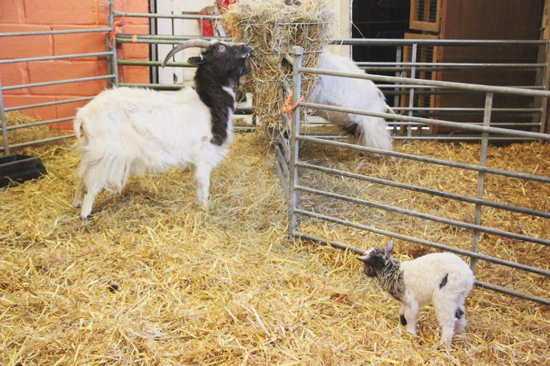 Wimpole Farm