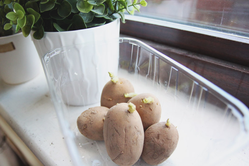 Vegetable Garden - Potatoes Estima