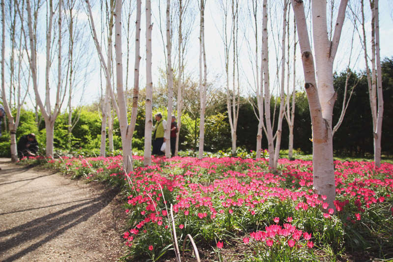 Anglesey Abbey, Cambridge Tulips, Tulipia