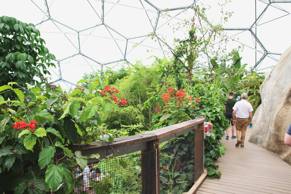 The Rainforest Biome, The Eden Project
