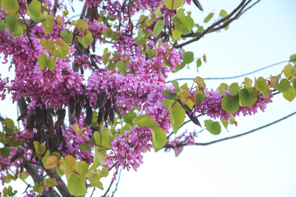 Flowers in Alfama, Lisbon, Portugal