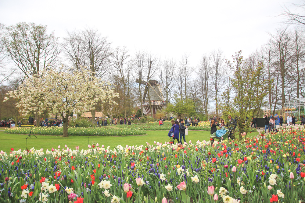 Windmill at Keukenhof Gardens, Holland
