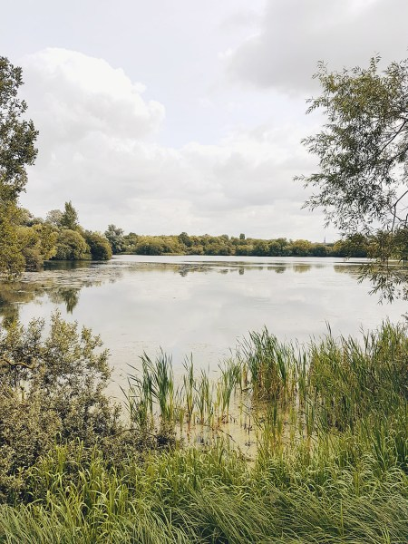 Rushden Lakes Shopping Centre Nature Walk