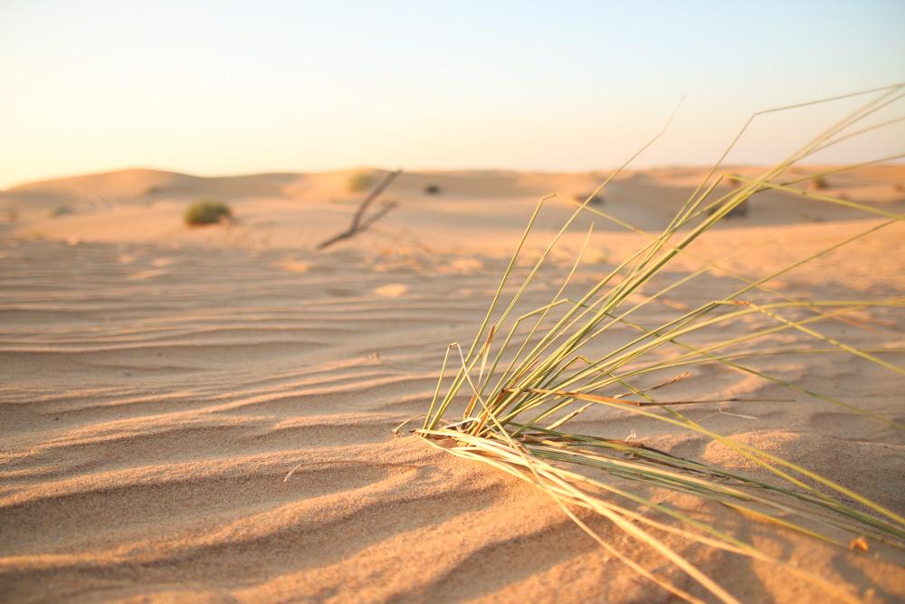 Sun Setting over the sand dunes in the Dubai Desert