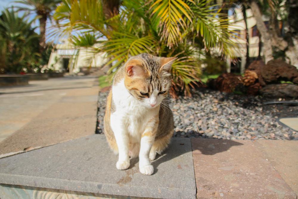 Gran Canaria Cats