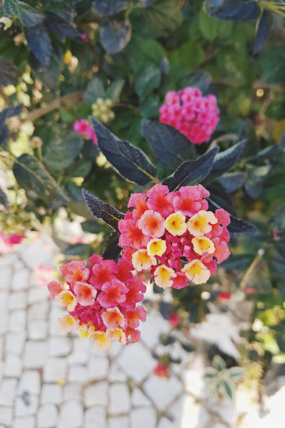 Spring flowers in Lagos, Portugal