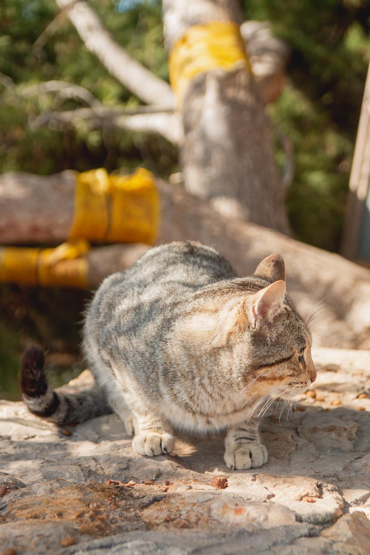Cats at Praia da Marinha, The Algarve, Portugal