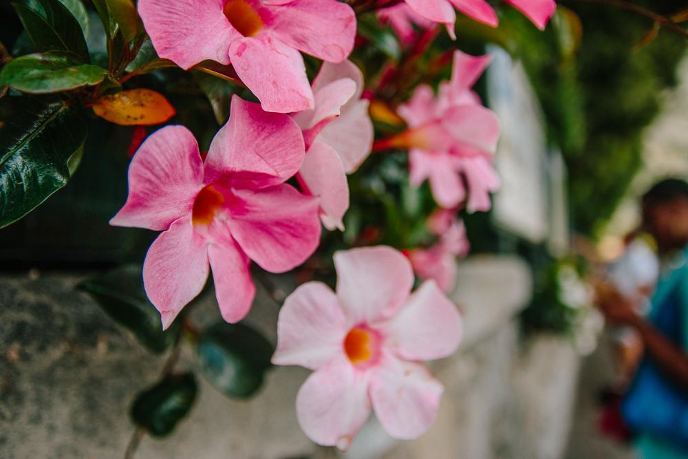 Pink FLowers in Limone, Lake Garda