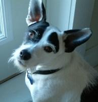 The gift of self care via a dog
