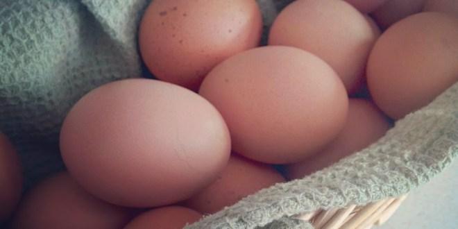 My Eggs Taste Like Garlic