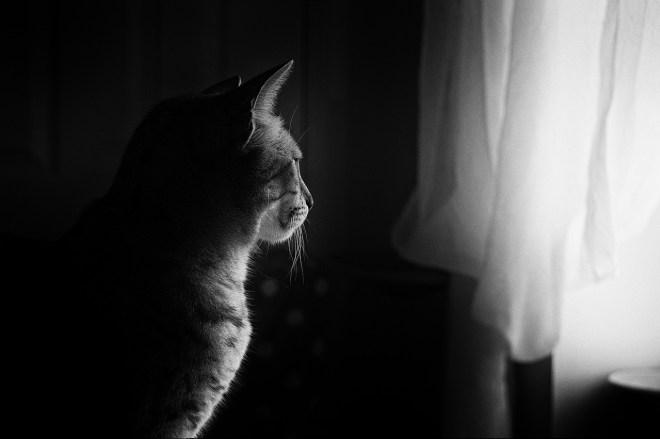 cat-659426_1280