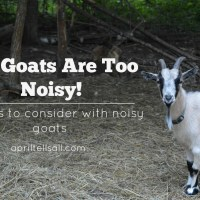 My Goats Are Too Noisy!