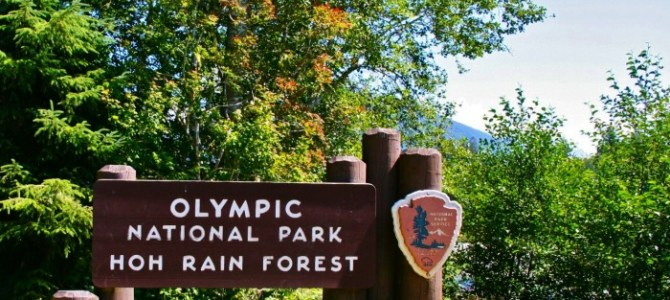 Virtual Hike in the Olympic National Forest