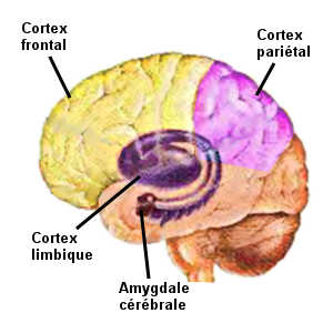 cerveau-homme-femme