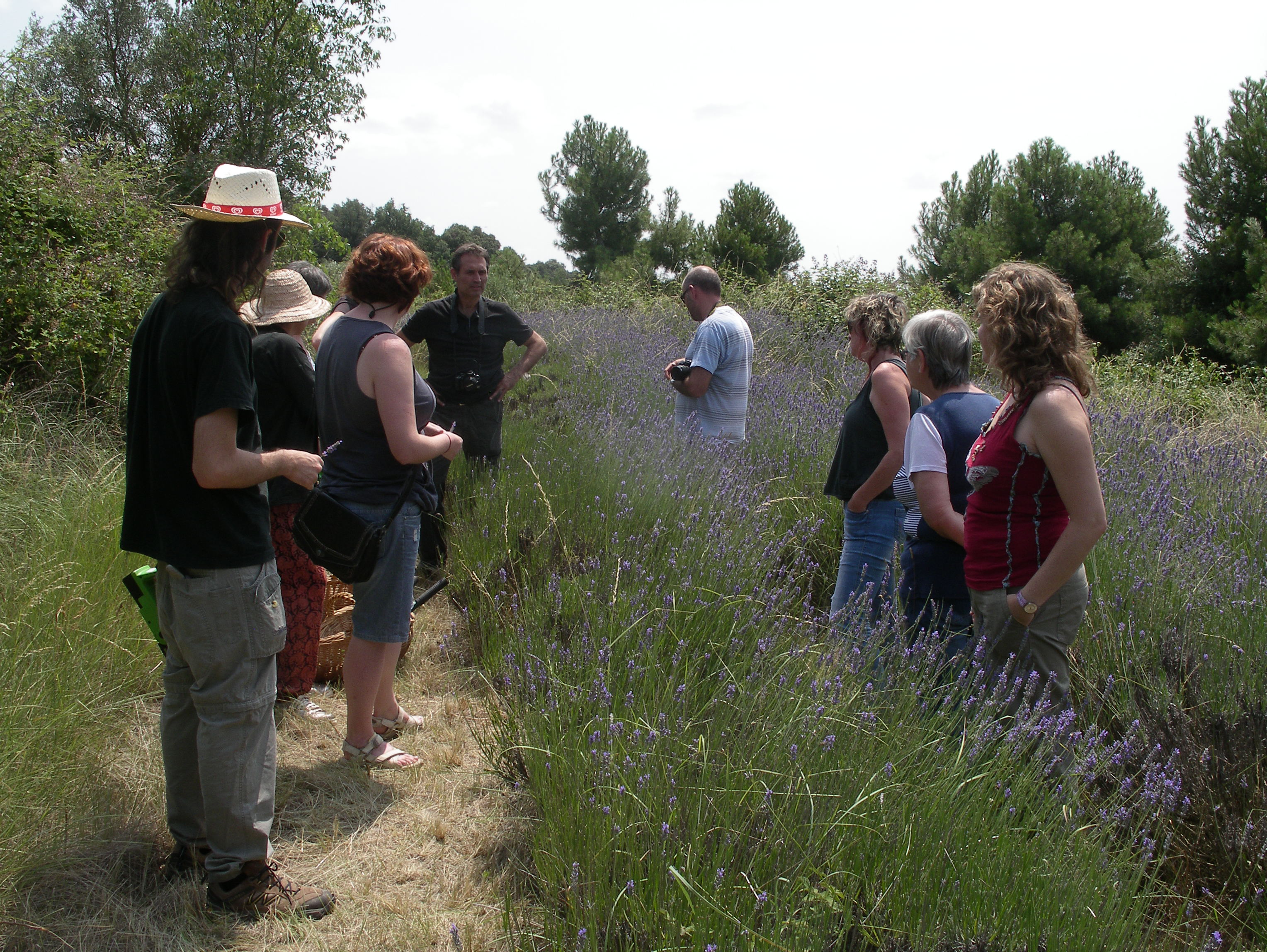 grundtvig plant wild forest plant wild harvesting learning in europe catalonia spain training on medicinal and aromatic plants production