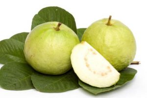 guava fruit-aptso exports-fruits export