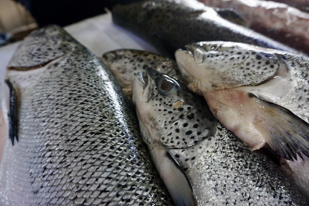 Salmones, Caleta Portales