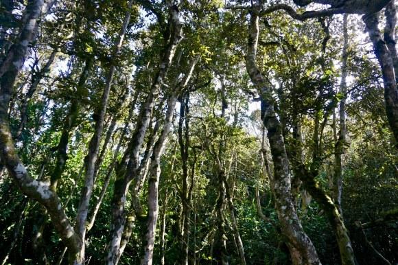 Bosque Valdiviano, Parque Fray Jorge
