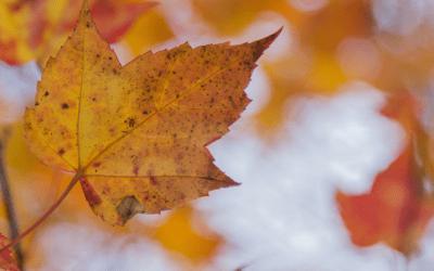 5 Cheap Fall Decorating Ideas