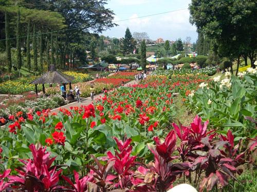 Pesona Kebun Bunga Cihideung, Bandung