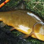 fish-1545345587.jpg