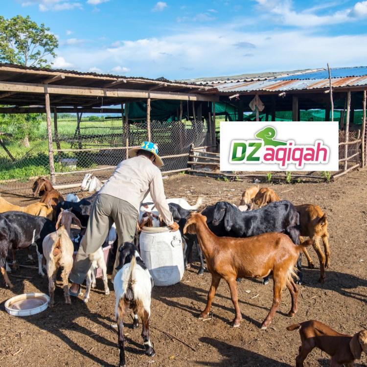 harga kambing di purwakarta