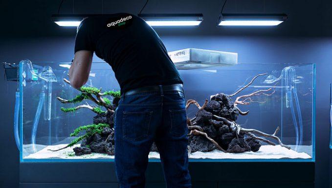 Обслуживание аквариумов Киев