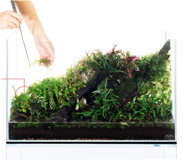 Высадка растений в аквариум - инструкция ADA